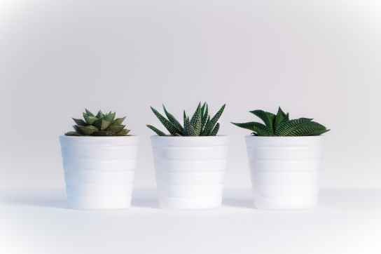 three green assorted plants in white ceramic pots